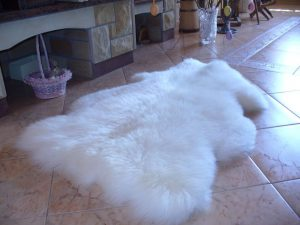 Ovčia kožušina dlhosrstá aj krátkosrstá biela 120 cm